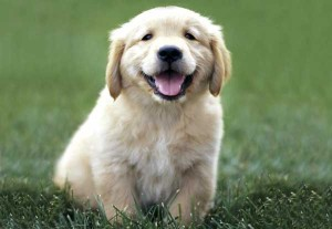 Adorable Puppy picture